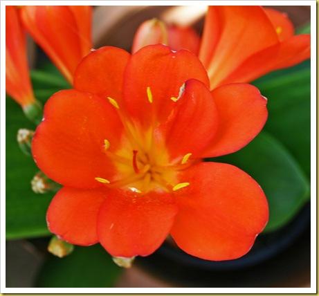 orangecloseup
